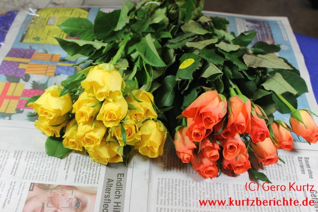 Erfahrungsbericht Rosen Und Blumen Mit Glycerin Konservieren