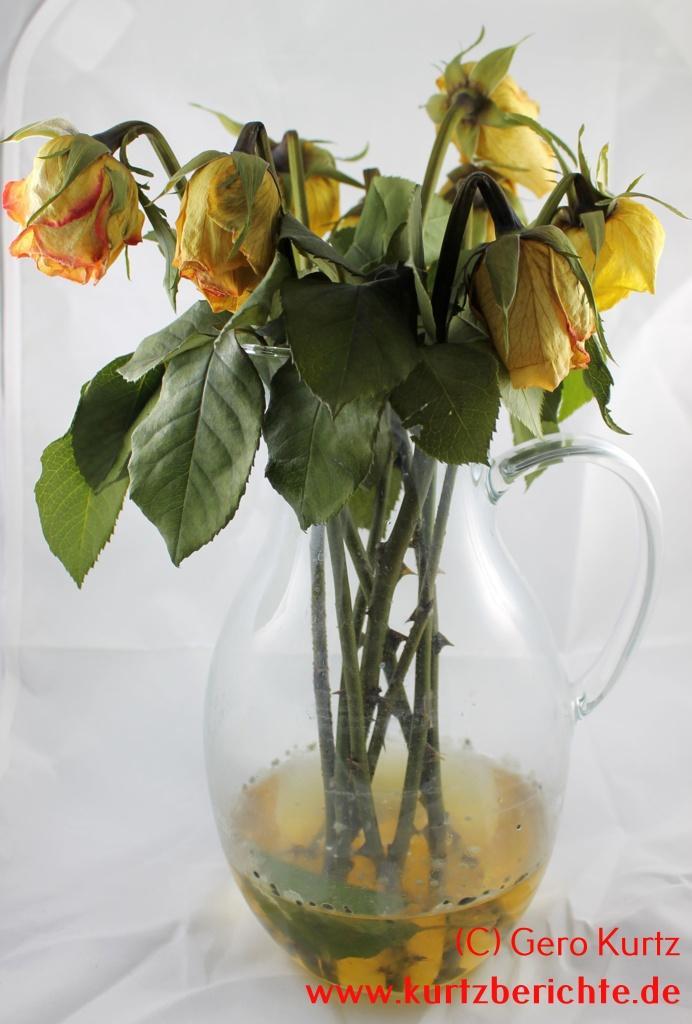 erfahrungsbericht rosen und blumen mit glycerin konservieren. Black Bedroom Furniture Sets. Home Design Ideas