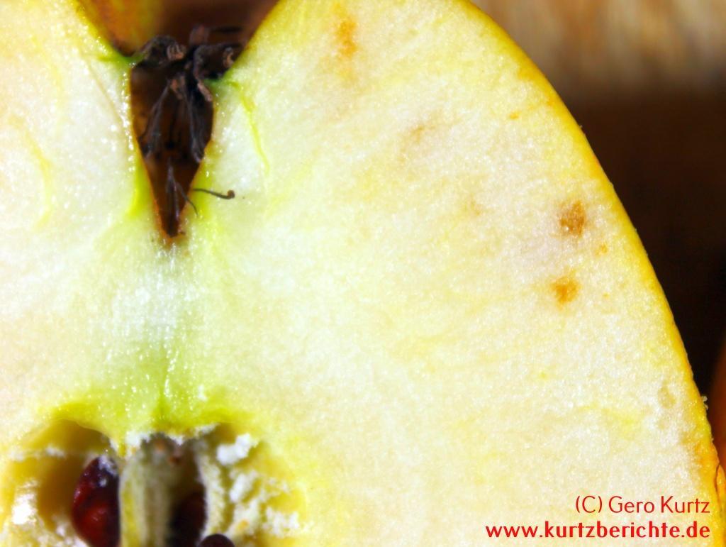 viele äpfel was tun
